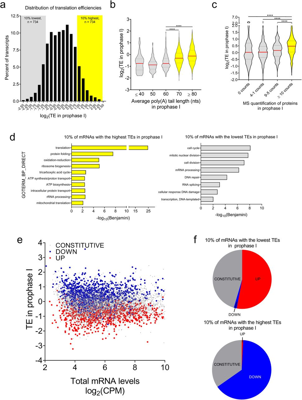 Genome-wide analysis reveals a switch in the translational program