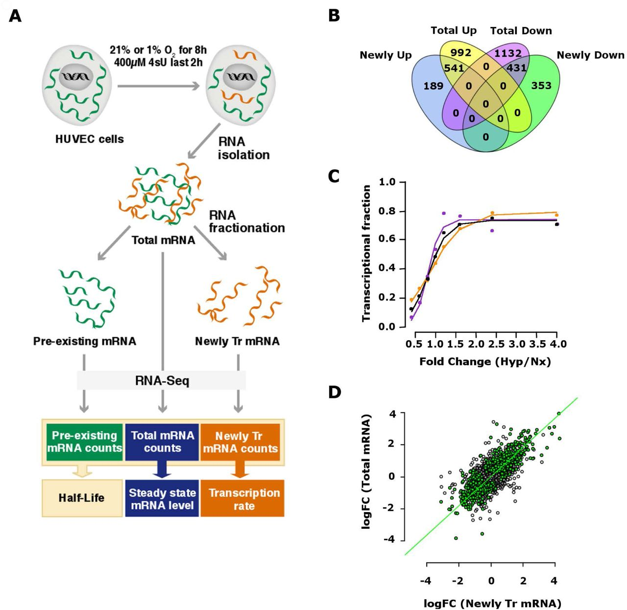 Metabolic labelling of RNA uncovers the contribution of