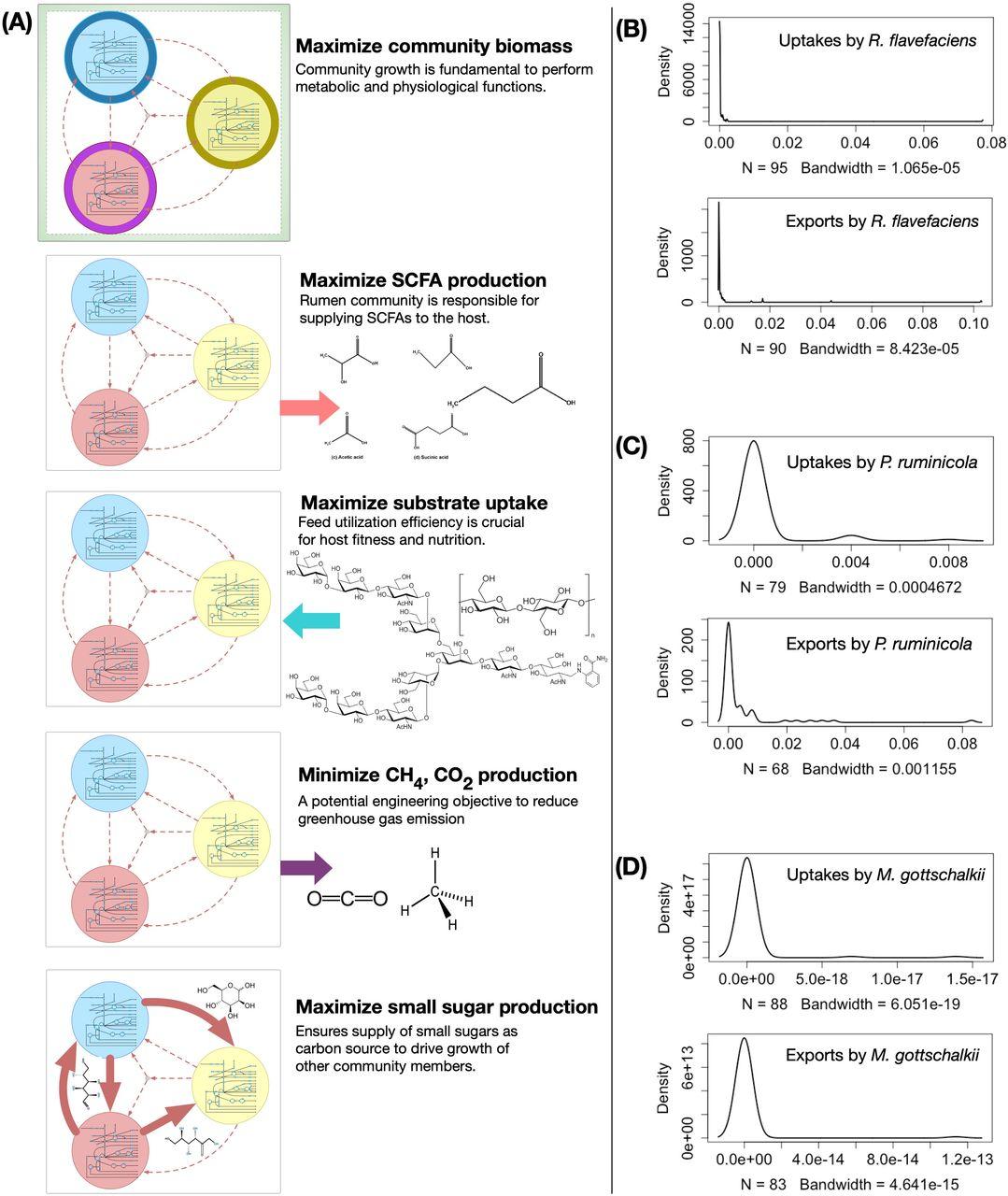 Metabolic Modeling Elucidates the Transactions in the Rumen