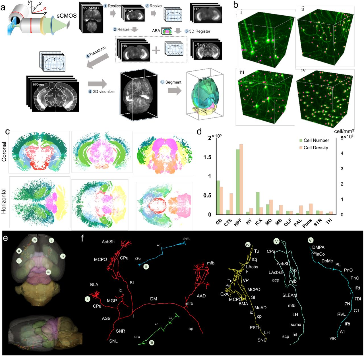 Fast, 3D isotropic imaging of whole mouse brain using multi