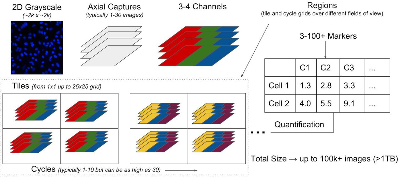 Cytokit: A single-cell analysis toolkit for high dimensional