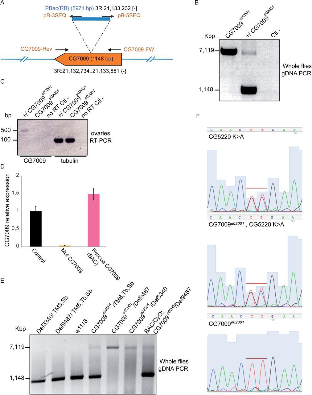 tRNA 2'-O-methylation modulates small RNA silencing and life