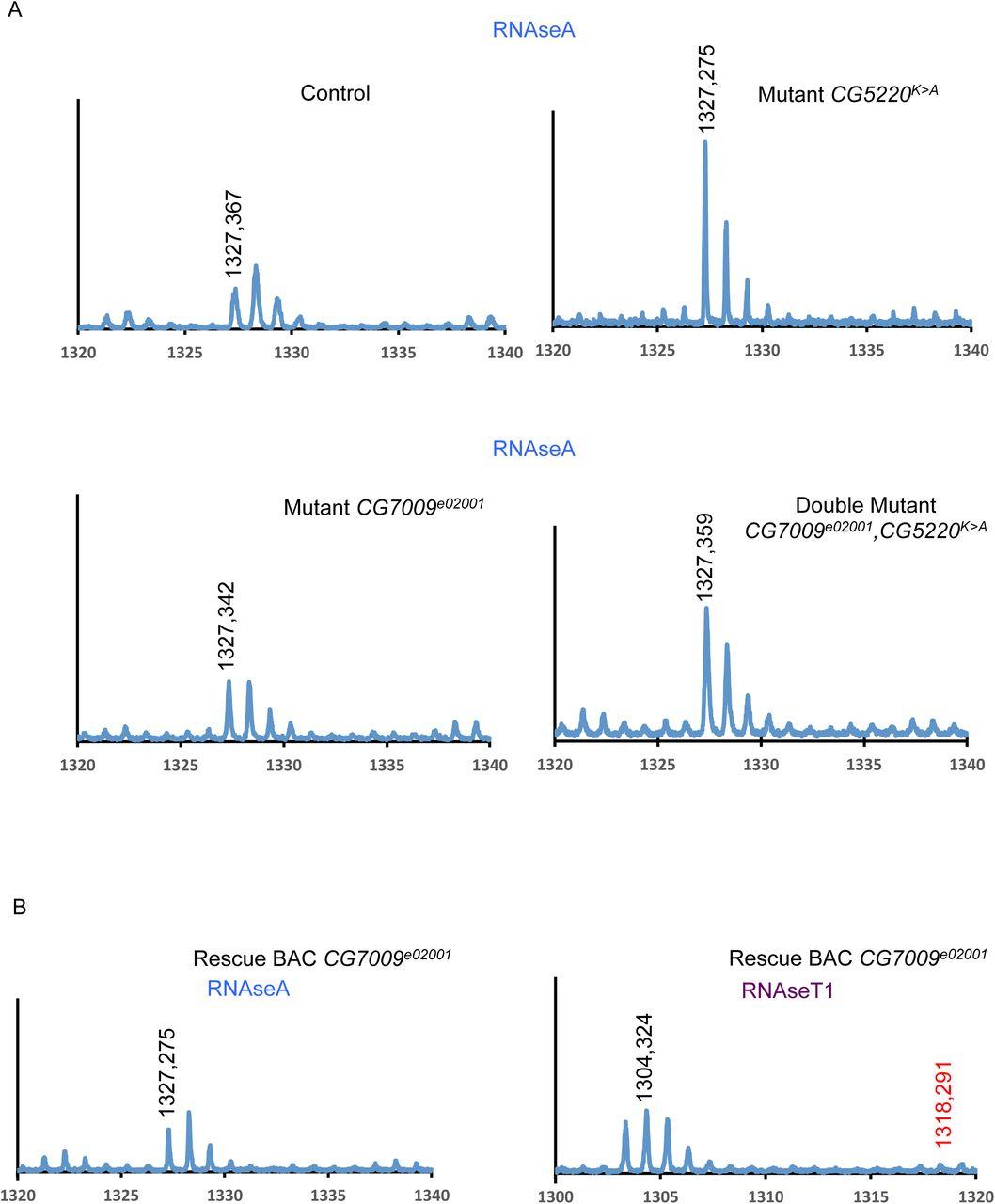 tRNA 2'-O-methylation modulates small RNA silencing and life span in on