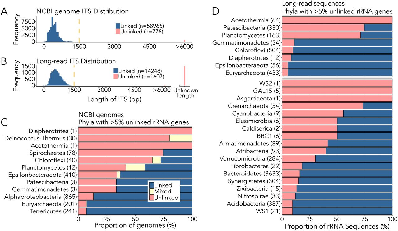 Unlinked rRNA genes are widespread among Bacteria and Archaea | bioRxiv