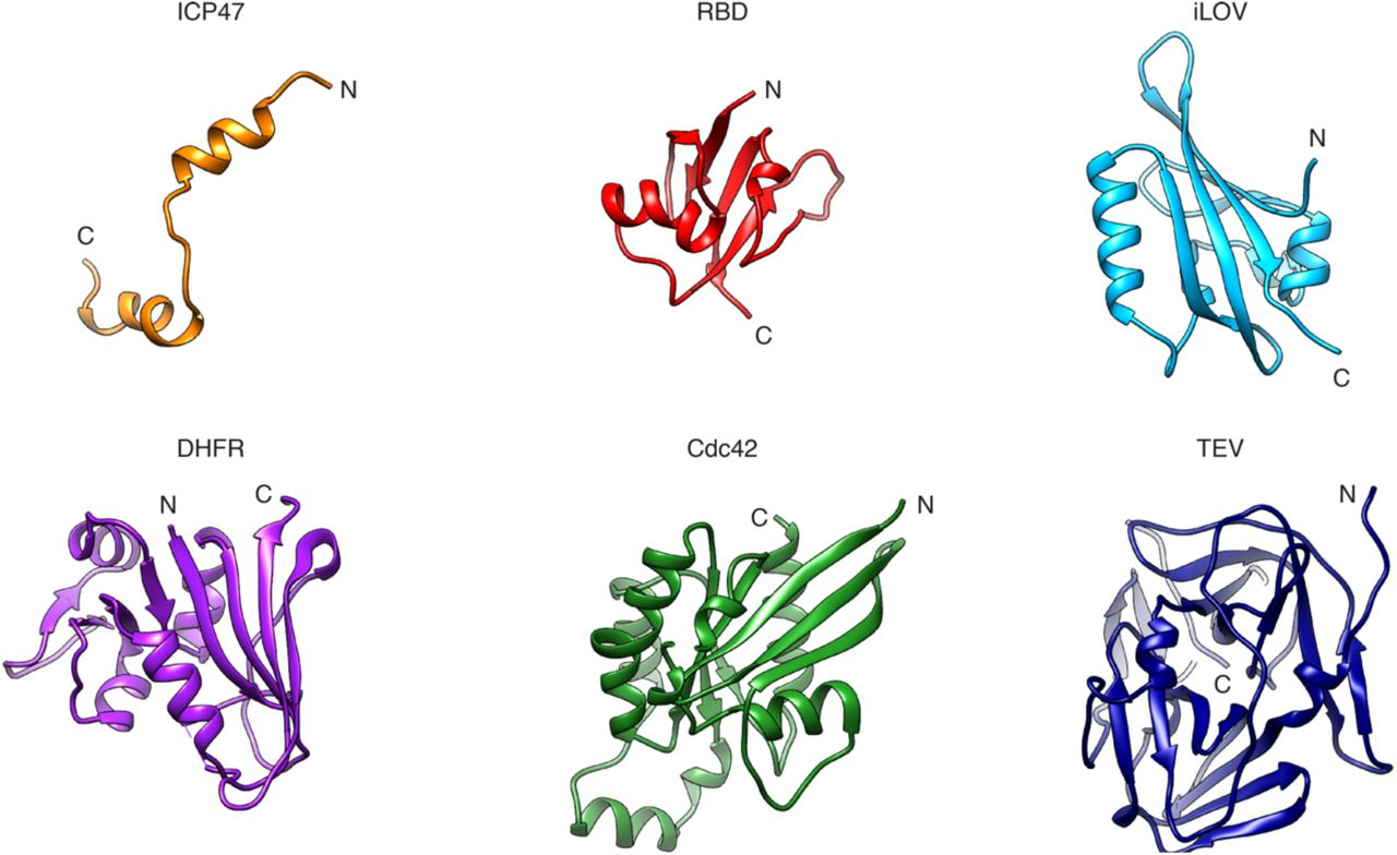 Towards the application of Tc toxins as a universal protein