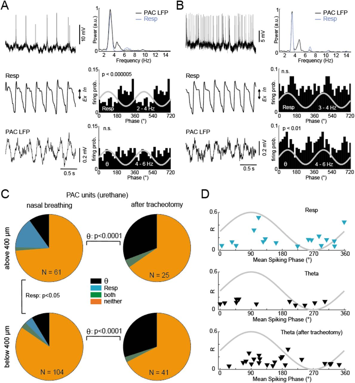 Respiration competes with theta for modulating parietal