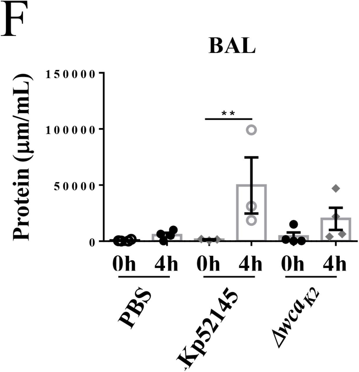 A porcine ex vivo lung perfusion model to investigate