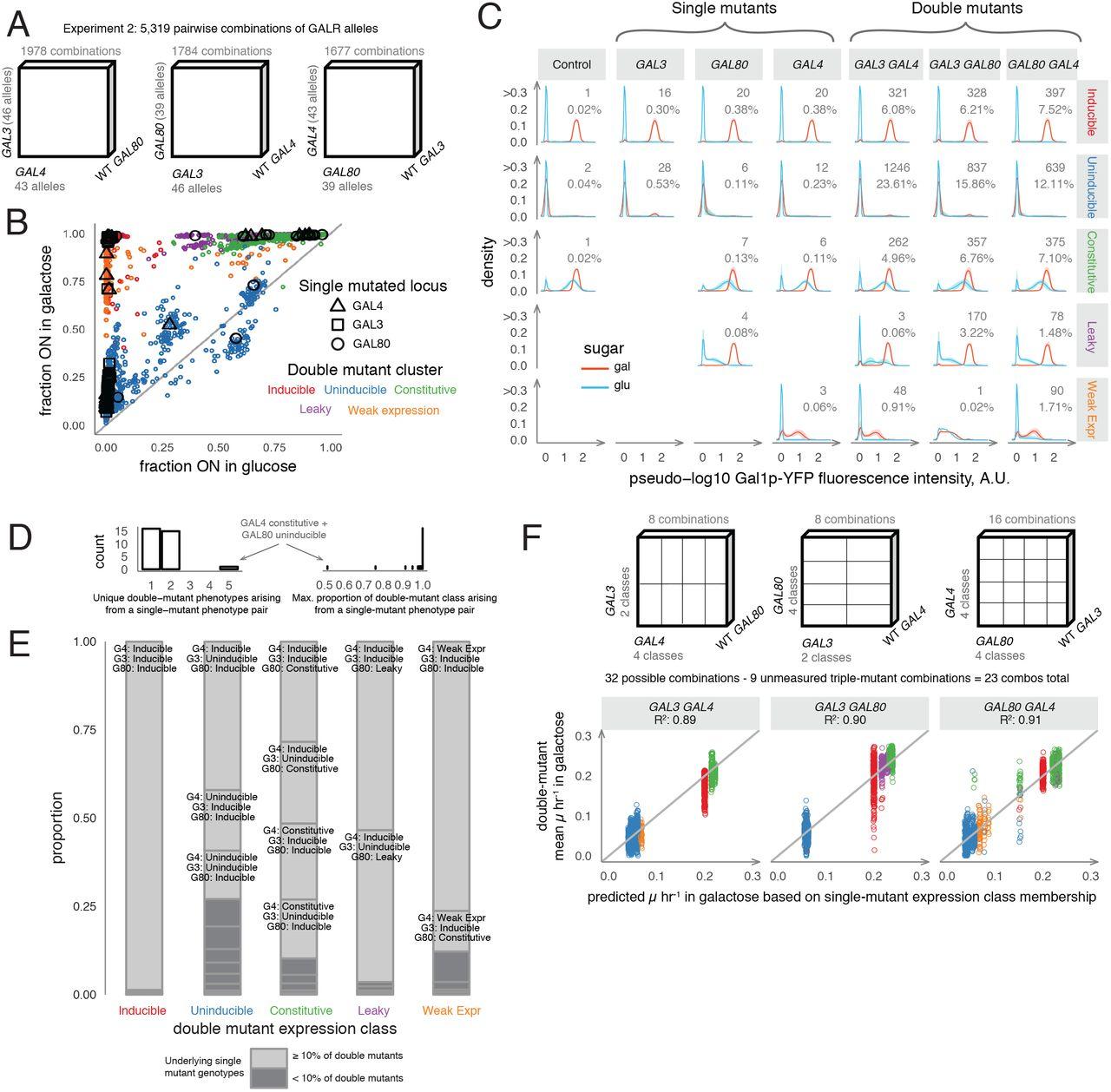 Harmonious Genetic Combinations Rewire Regulatory Networks And Flip Gene Essentiality Biorxiv