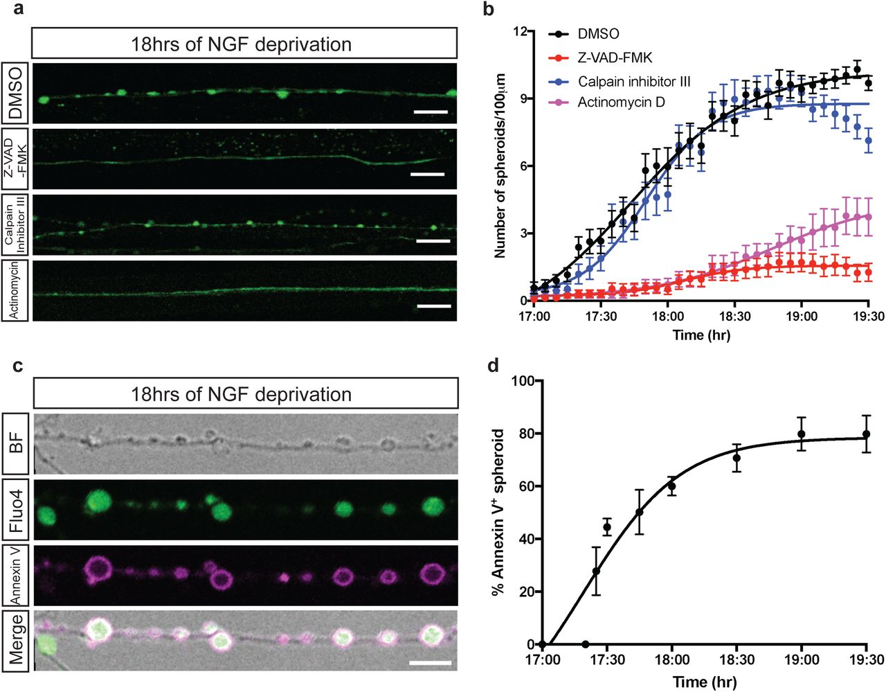 p75NTR and DR6 regulate distinct phases of axon degeneration ... on