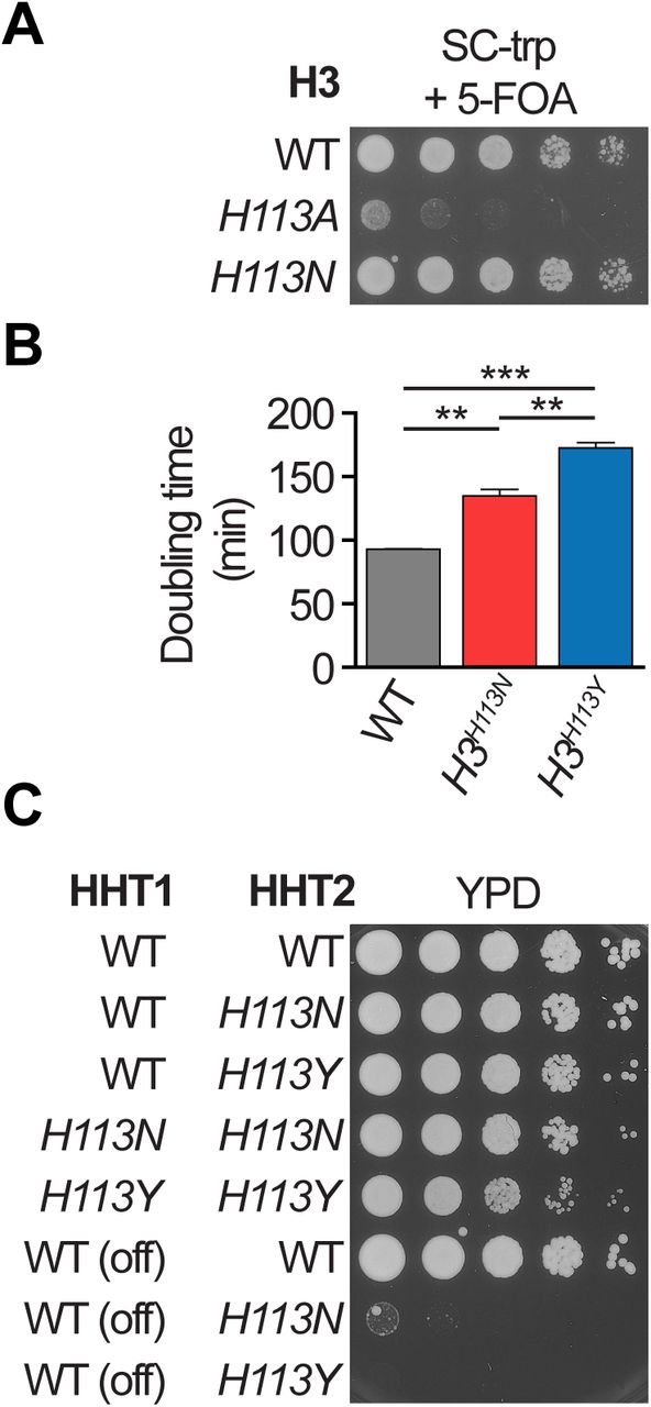 The Histone H3-H4 Tetramer is a Copper Reductase Enzyme