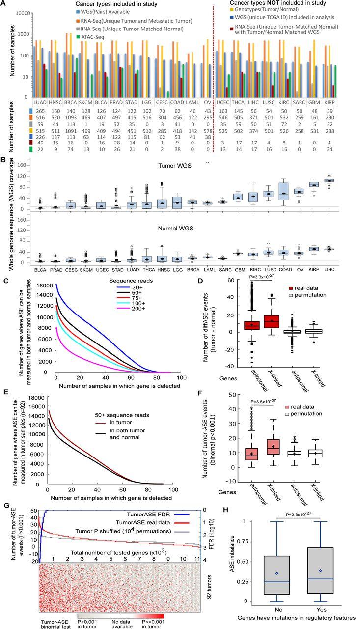 A catalog of cis-regulatory mutations in 12 major cancer