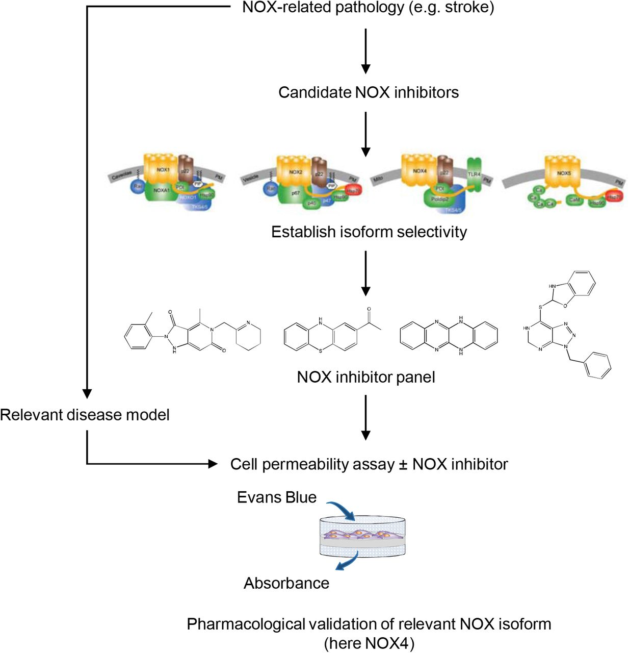 Isoform-selective NADPH oxidase inhibitor panel for