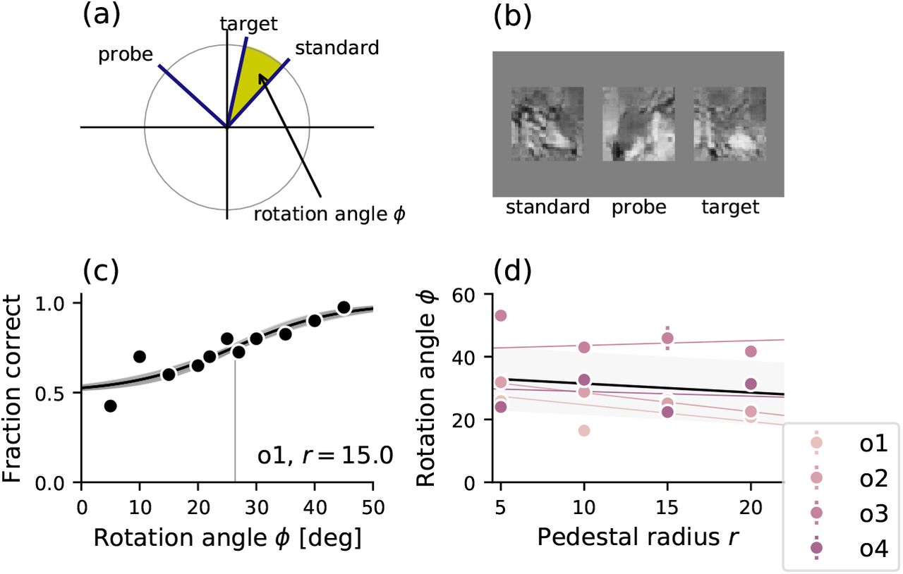 Contrast invariant tuning in human perception of image content | bioRxiv