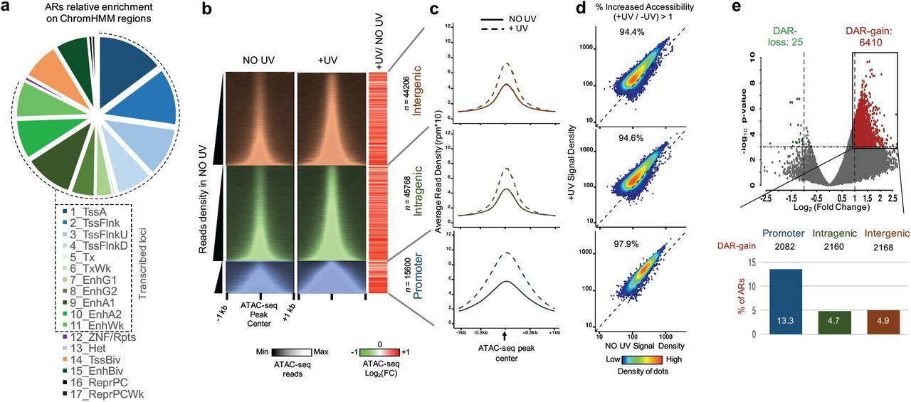 Continuous transcription initiation guarantees robust repair