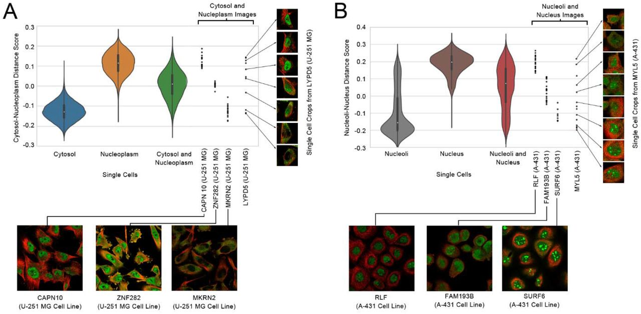 Learning unsupervised feature representations for single cell