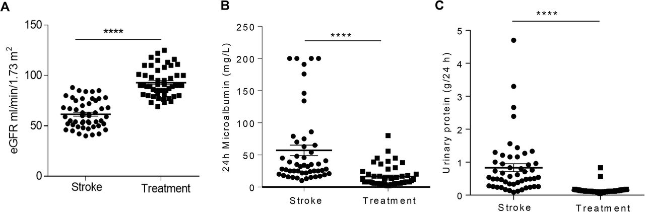 Cerebral ischemia induces TRPC6 in the glomerular podocytes: A novel