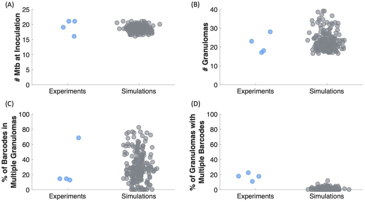 Mature nl philana A Computational Model Tracks Whole Lung Mycobacterium Tuberculosis Infection And Predicts Factors That Inhibit Dissemination Biorxiv