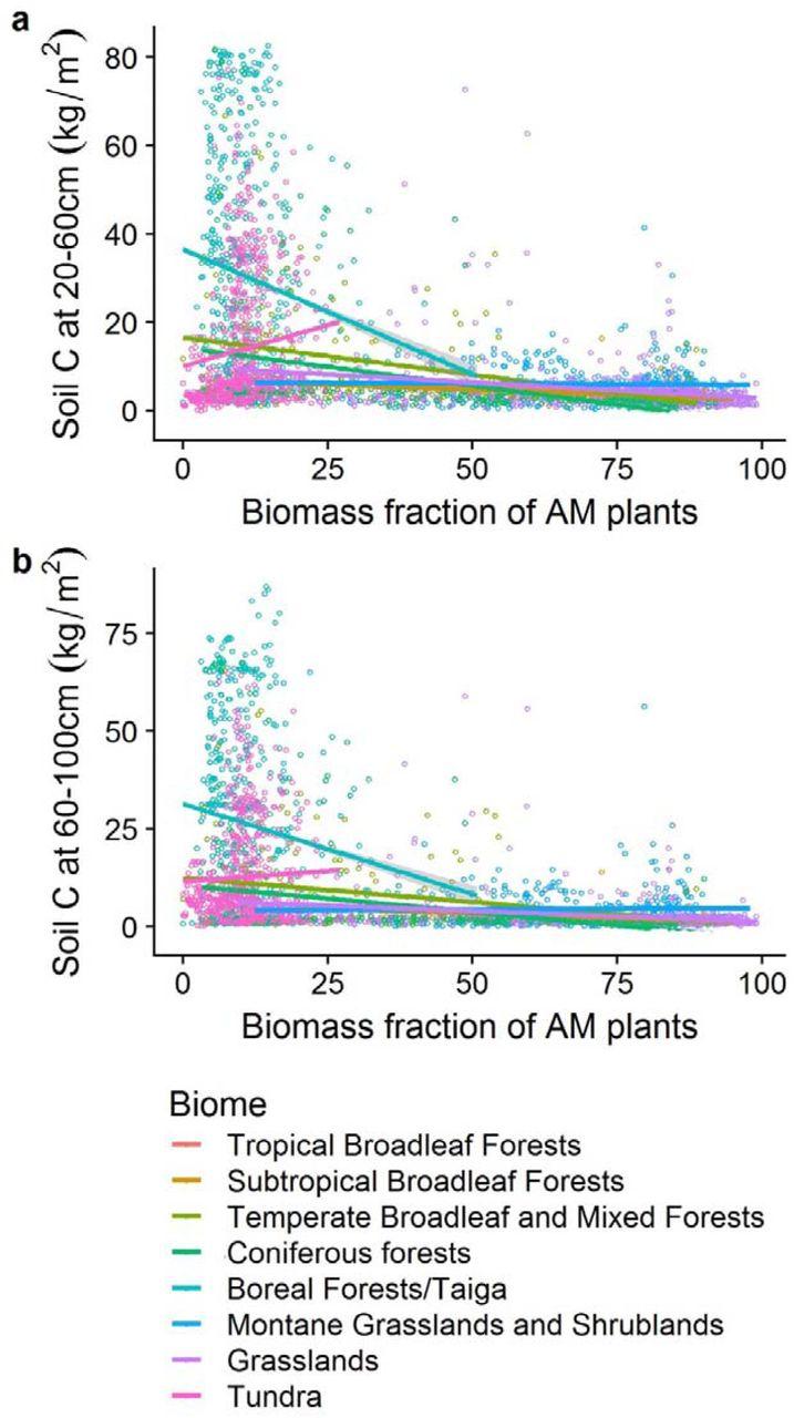 Global mycorrhizal plant distribution linked to terrestrial