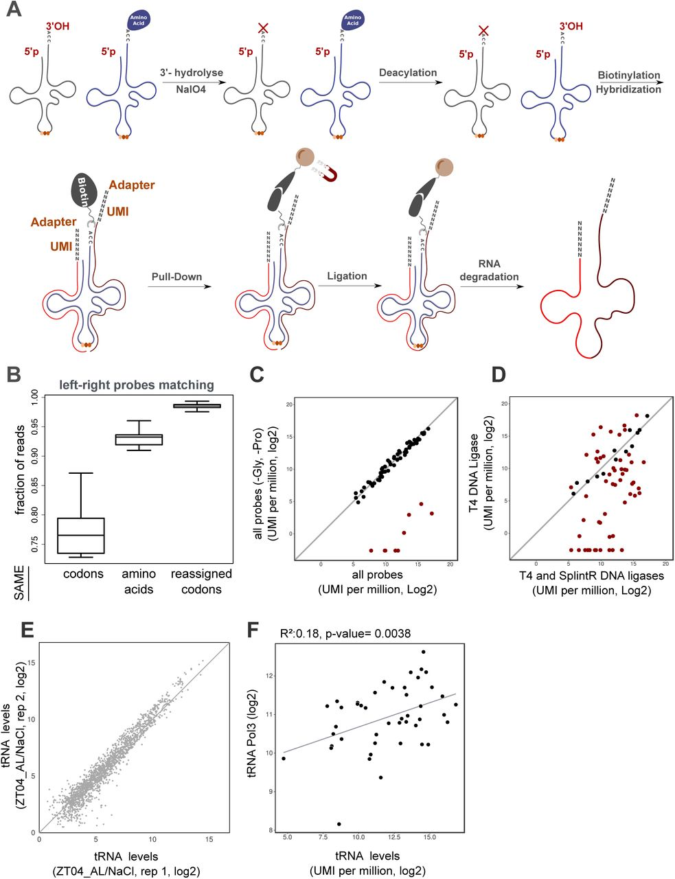 Landscapes of ribosome dwell times and relationship with