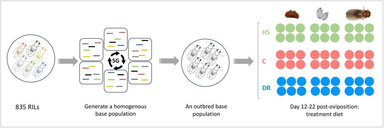Diverse biological processes coordinate the transcriptional response