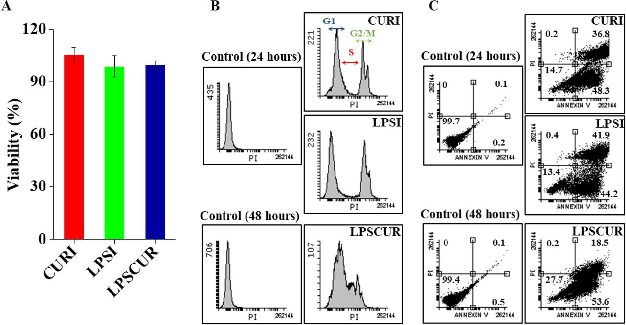 Effect of curcumin and/or LPS on cell viability and apoptosis of A549 cells. A549 cells were treated with curcumin (10 µM) and/or LPS (1 µg/ml) for different time. (A) Cell viability was monitored by CellTiter 96® AQueous One Solution Cell Proliferation Assay. Data is presented as mean ± Standard error of mean of six data points. (B) Cells were fixed and then stained with propidium iodide (50 µg/ml) and Annexin V-FITC. The DNA contents were analyzed by flow cytometry. Representative result from three independent experiments is presented. x- and y-axis present DNA content and cell number, respectively. (C) Cells (in %) undergoing early- apoptotic or late-apoptotic phase were calculated using Flowing software.