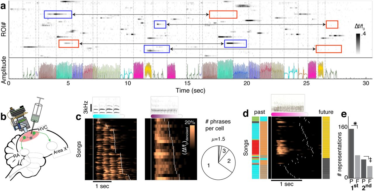 Hidden neural states underlie canary song syntax | bioRxiv