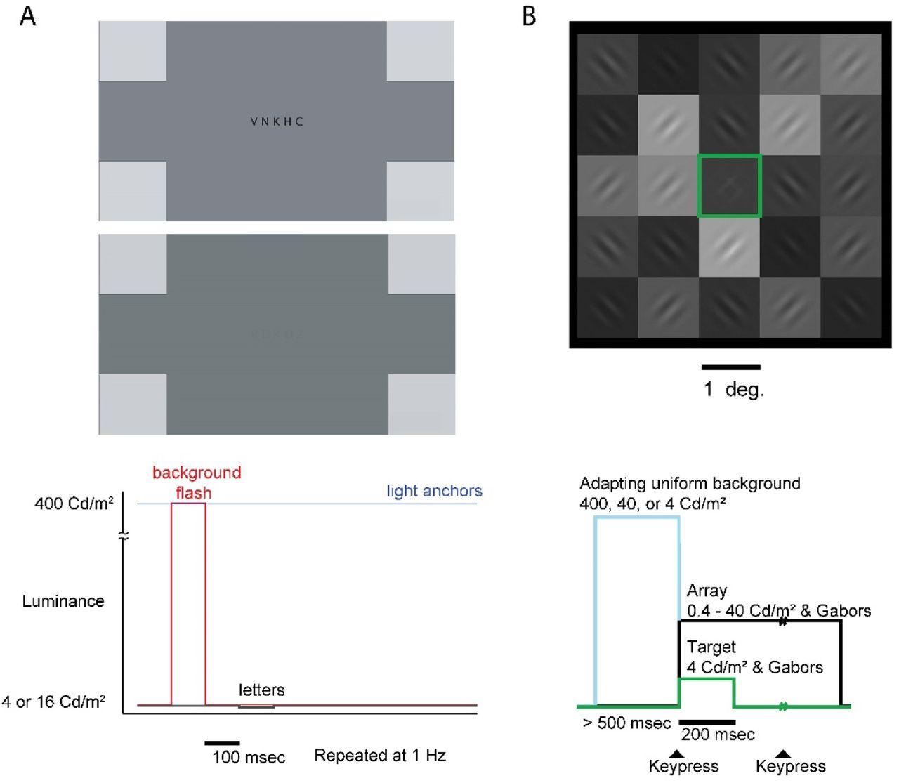 An 11-bit High Dynamic Range (HDR) Luminance Display and Its