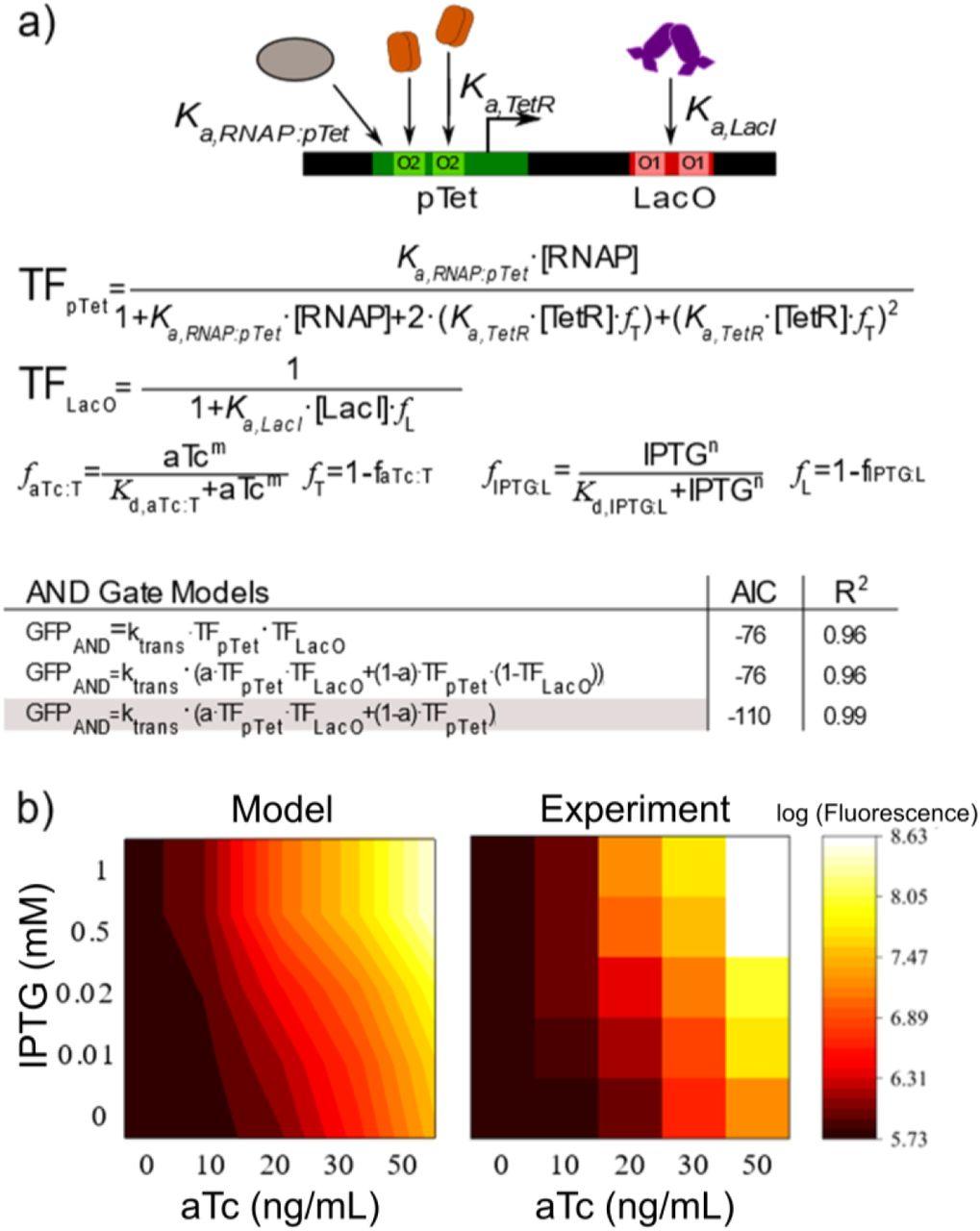 Construction of two-input logic gates using Transcriptional Interference |  bioRxiv