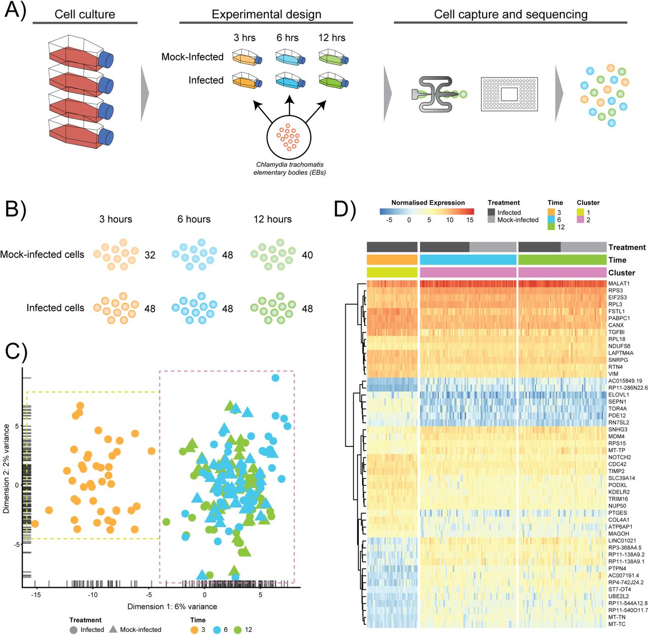 Early transcriptional landscapes of Chlamydia trachomatis