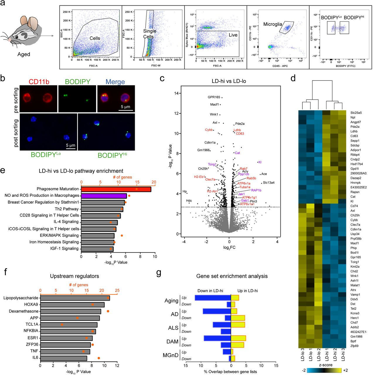 Lipid Droplet Accumulating Microglia Represent A