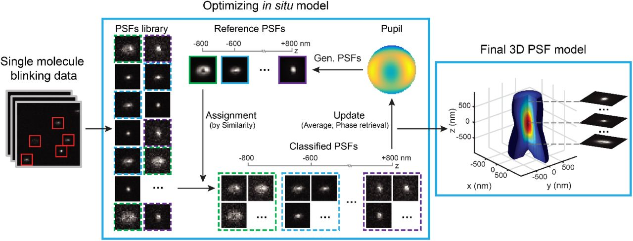 Three dimensional nanoscopy of whole cells and tissues with