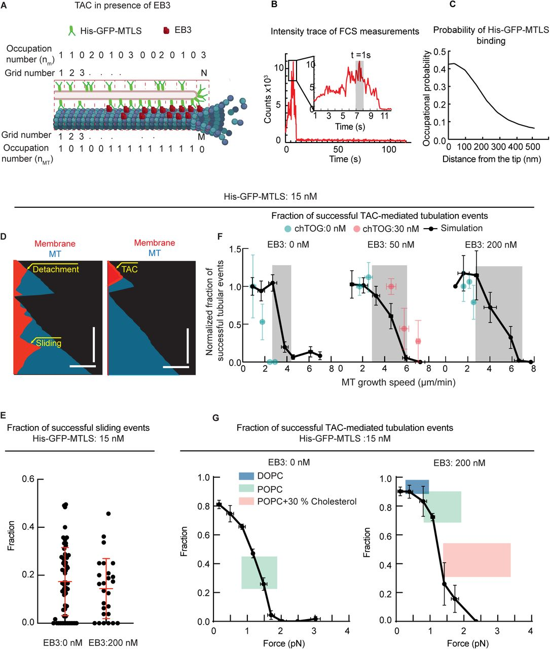 Mechanisms of motor-independent membrane remodeling driven