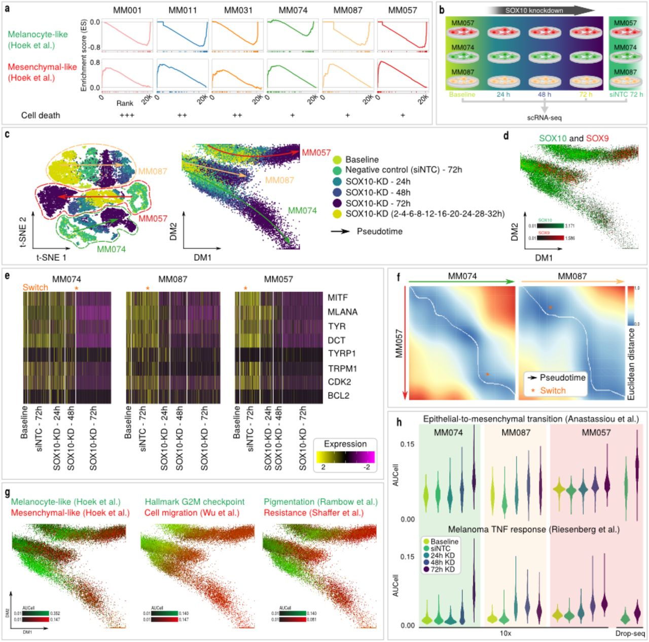 Single-cell gene regulatory network analysis reveals new