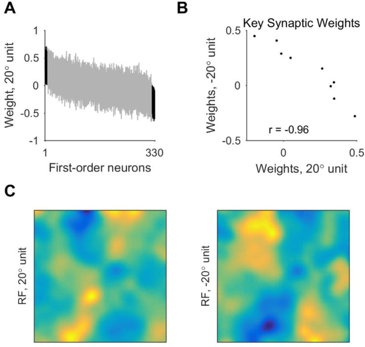 Orientation processing by synaptic integration across first