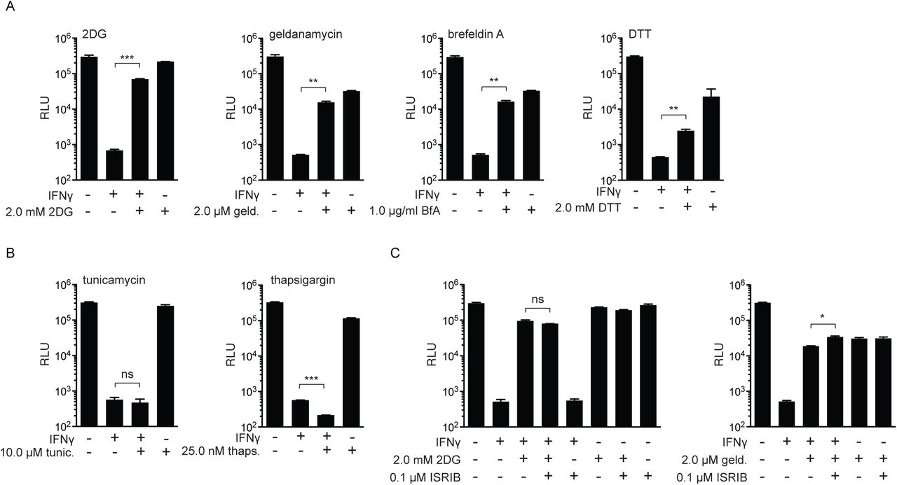 Differential effect of UPR stress stimuli on rescue of L. pneumophila replication in IFNγ-stimulated macrophages. ( A ) RLU from LP02 Δ flaA Δ uhpC lux L. pneumophila from infected WT C57BL/6 BMMs stimulated for 48 hours post-infection with 6.0 ng/mL IFNγ, 2.0 mM 2DG, 2.0 μM geldanamycin (geld.), 1.0 μg/ml brefeldin A (BfA), and 2.0 mM dithiothreitol (DTT) as indicated. ( B ) RLU from LP02 Δ flaA Δ uhpC lux L. pneumophila from infected WT C57BL/6 BMMs stimulated for 48 hours post-infection with 6.0 ng/mL IFNγ, 10.0 μM tunicamycin (tunic.), and 25.0 nM thapsigargin (thaps.) as indicated. ( C ) RLU from LP02 Δ flaA Δ uhpC lux L. pneumophila from infected WT C57BL/6 BMMs stimulated for 48 hours post-infection with 6.0 ng/mL IFNγ, 2.0 mM 2DG, 2.0 μM geldanamycin, and 0.1 μM ISRIB as indicated. *** = p