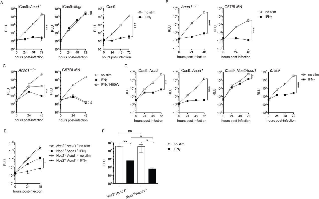 Nos2 and Acod1 transcription segregates with conditions permissive and restrictive for L. pneumophila replication in BMMs. ( A and B ) Histograms displaying transcripts per million (TPM) of Nos2 , Acod1 , Irgm1 , Irgm3 , Cybb , and Casp11 measured by RNAseq recovered from 1.0 × 10 6 BMMs/condition stimulated for 18 hours with 100 ng/ml Pam3CSK4 (Pam) alone or in combination with 6.0 ng/ml IFNγ, IFNγ + 2.0 mM 2DG, IFNγ + 2.0 μM geldanamycin (Geld), IFNγ + 1.0 μg/ml brefeldin A (BfA), IFNγ + 2.0 mM dithiothreitol (DTT), IFNγ + 10.0 μM tunicamycin (Tunic), IFNγ + 25.0 nM thapsigargin (Thaps).