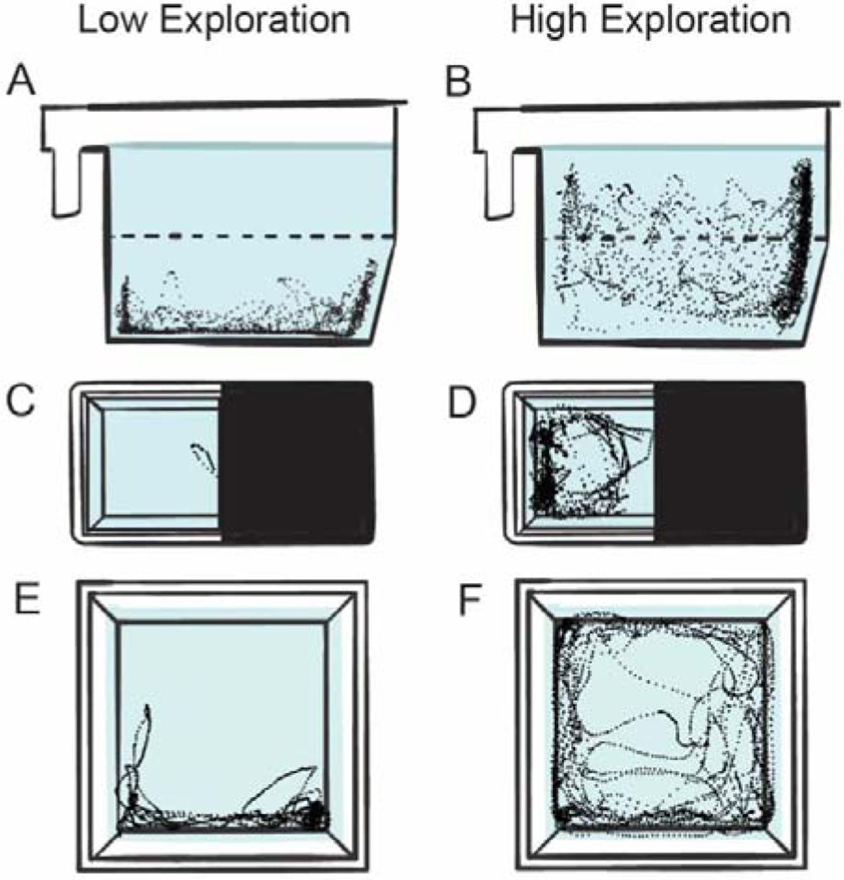 Exploratory behavior is associated with microhabitat and