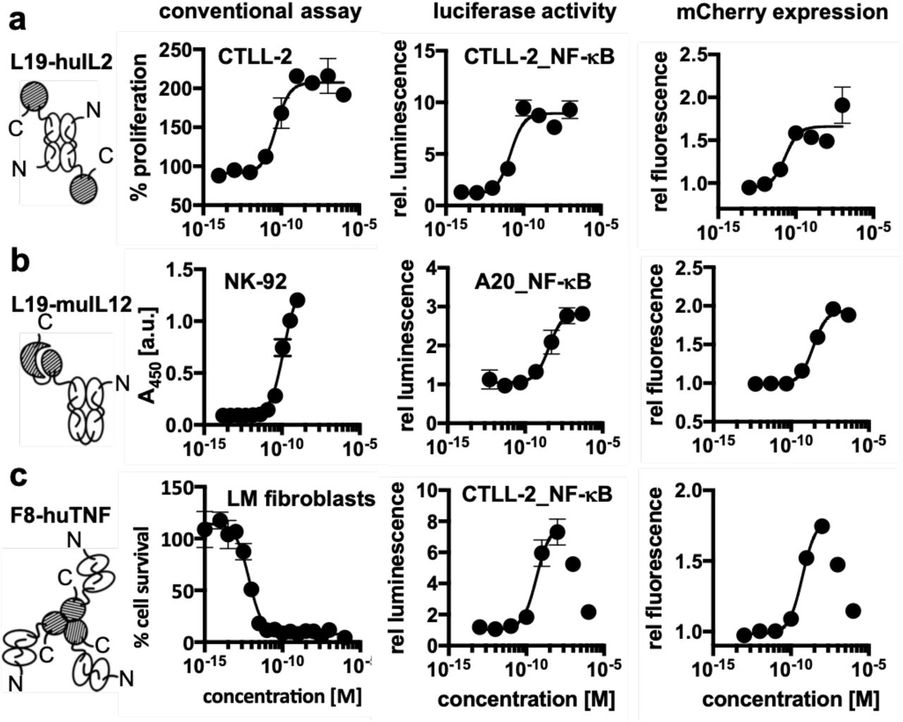 Comparison of the expression of luciferase and mCherry by the newly generated reporter cell lines with the response obtained with the same proteins in the conventional assay. The immunocytokines that were used for this assay are schematically depicted (the antibody moiety is depicted as empty symbols and the cytokine moieties as hatched areas) [a] the proliferation of CTLL-2 and the response of the CTLL-2 reporter cell line triggered by L19-IL2 [b] the production of interferon-γ by NK-92 cells and the response of the A20 reporter cell line triggered by L19-IL12 [c] the cytotoxicity of F8-TNF for L-M fibroblasts compared to the response of the CTLL-2 reporter cell line to F8-TNF. In the cases where a strong hook effect was observed, only the sigmoidal part was used for curve fitting as indicated by the solid line.