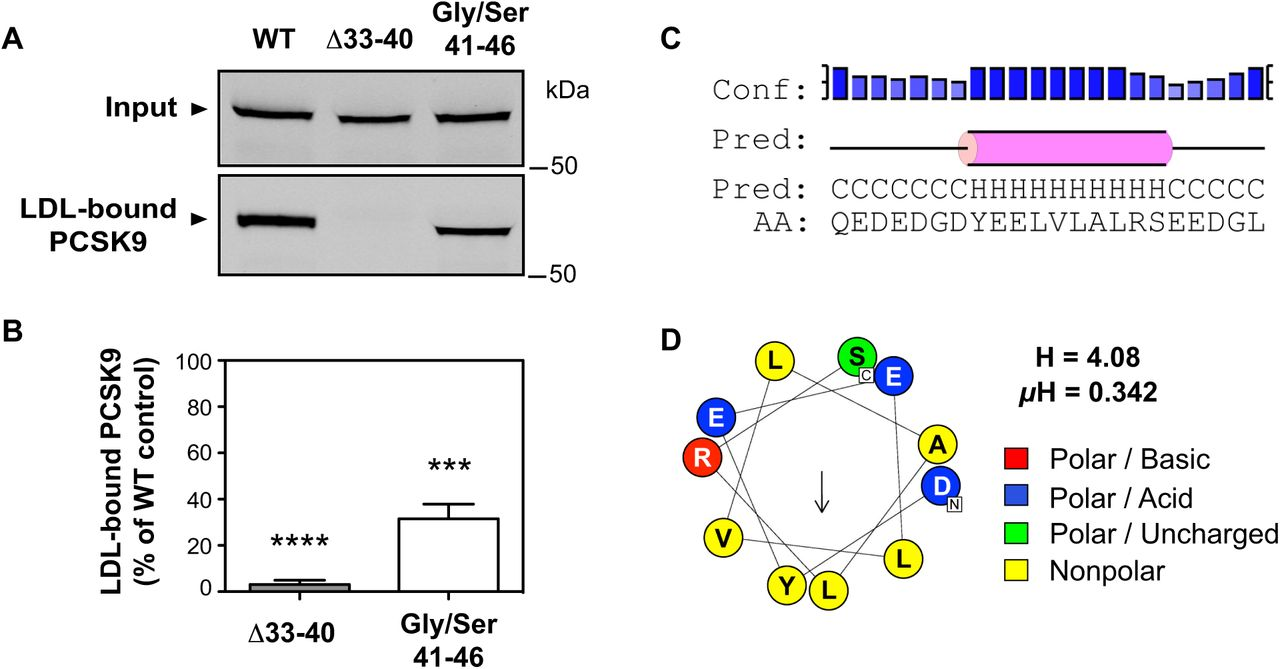 A transient amphipathic helix in PCSK9's prodomain