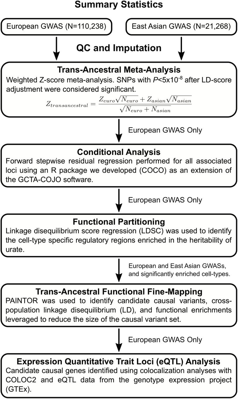 Genomic dissection of 43 serum urate-associated loci