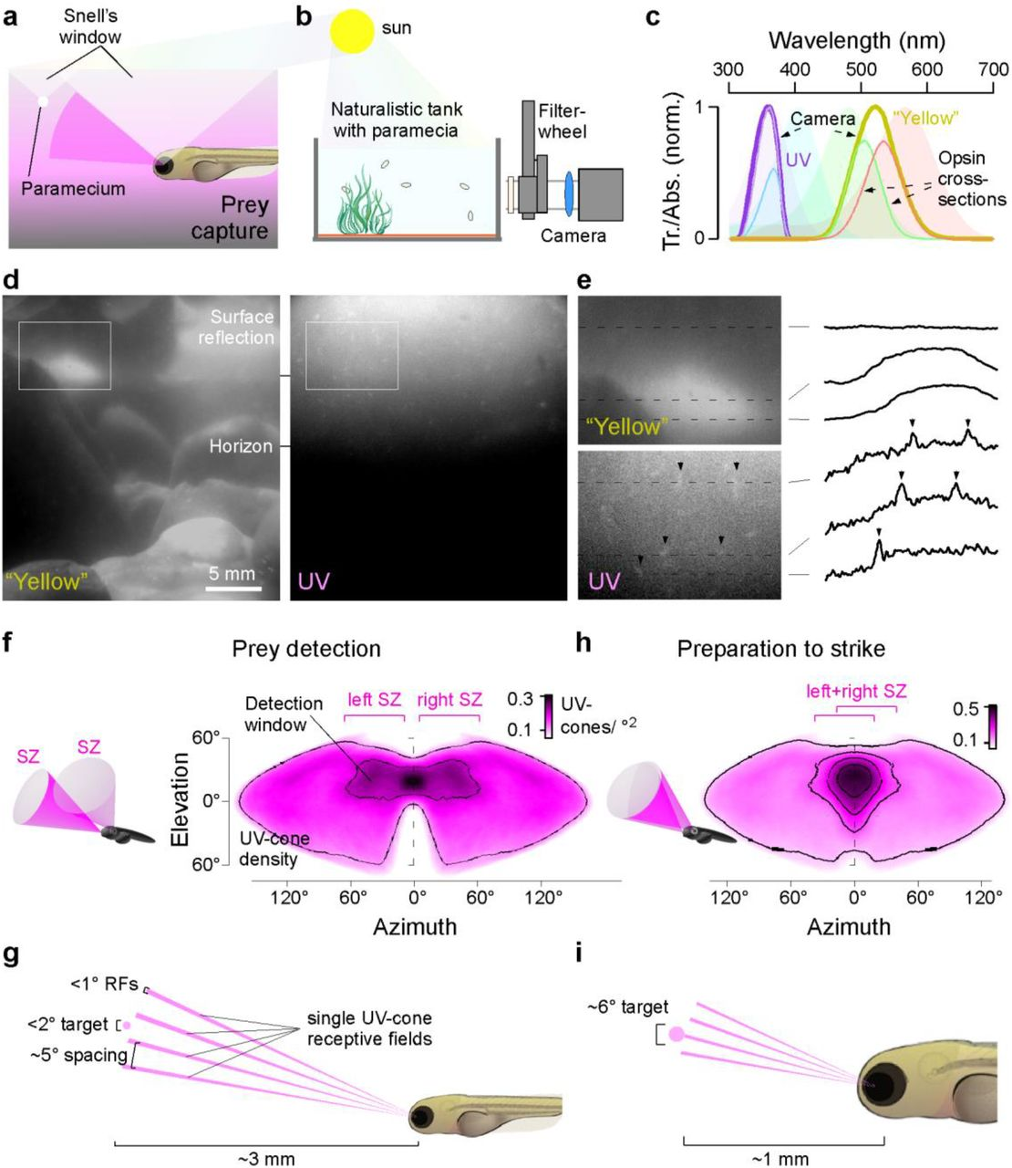 Cellular and molecular mechanisms of photoreceptor tuning