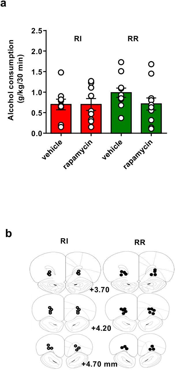 mTORC1 In The Orbitofrontal Cortex Promotes Habitual Alcohol