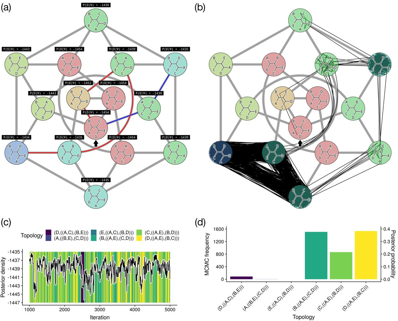 Practical Aspects of Phylogenetic Network Analysis Using