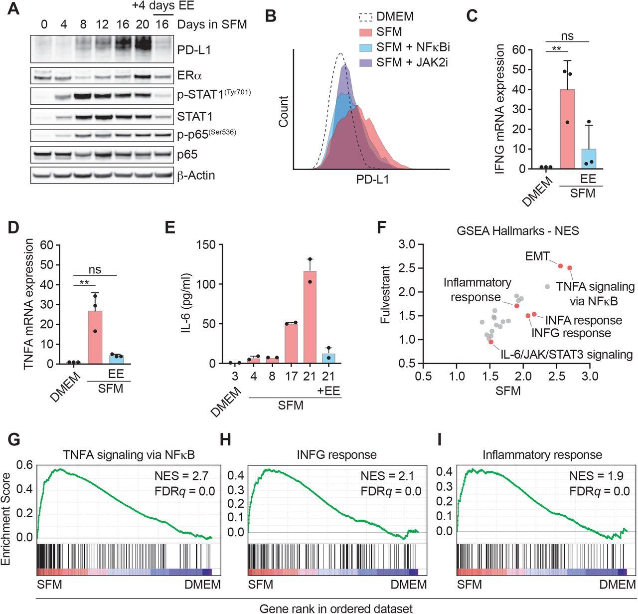 Estrogen deprivation triggers an immunosuppressive phenotype