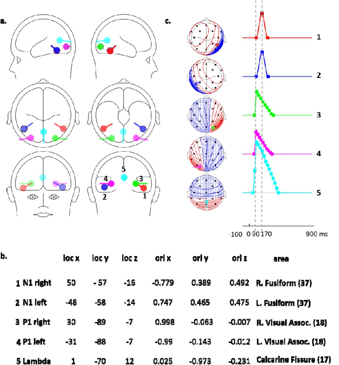 Face Selective Neural Activity: comparison between fixed and