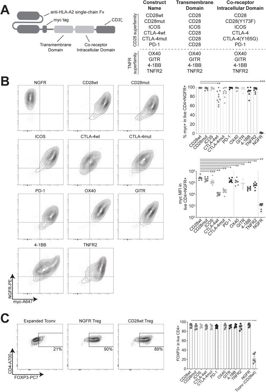 Functional effects of chimeric antigen receptor co-receptor