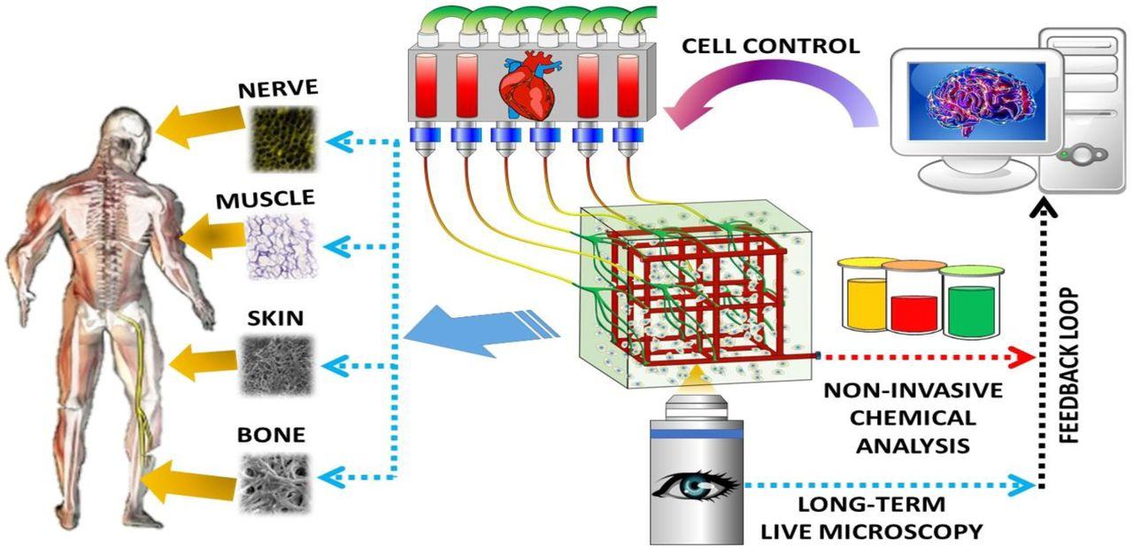 An Automated Addressable Microfluidics Device for Minimally