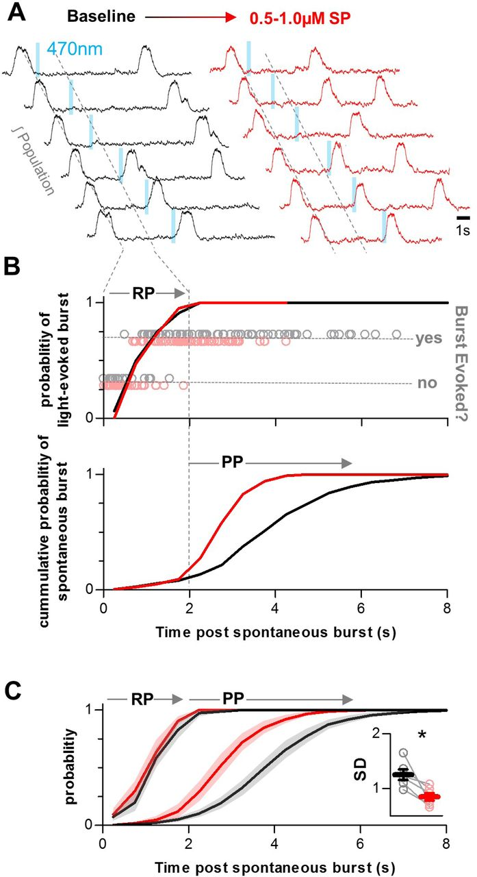 Insights Into The Dynamic Control Of Breathing Revealed