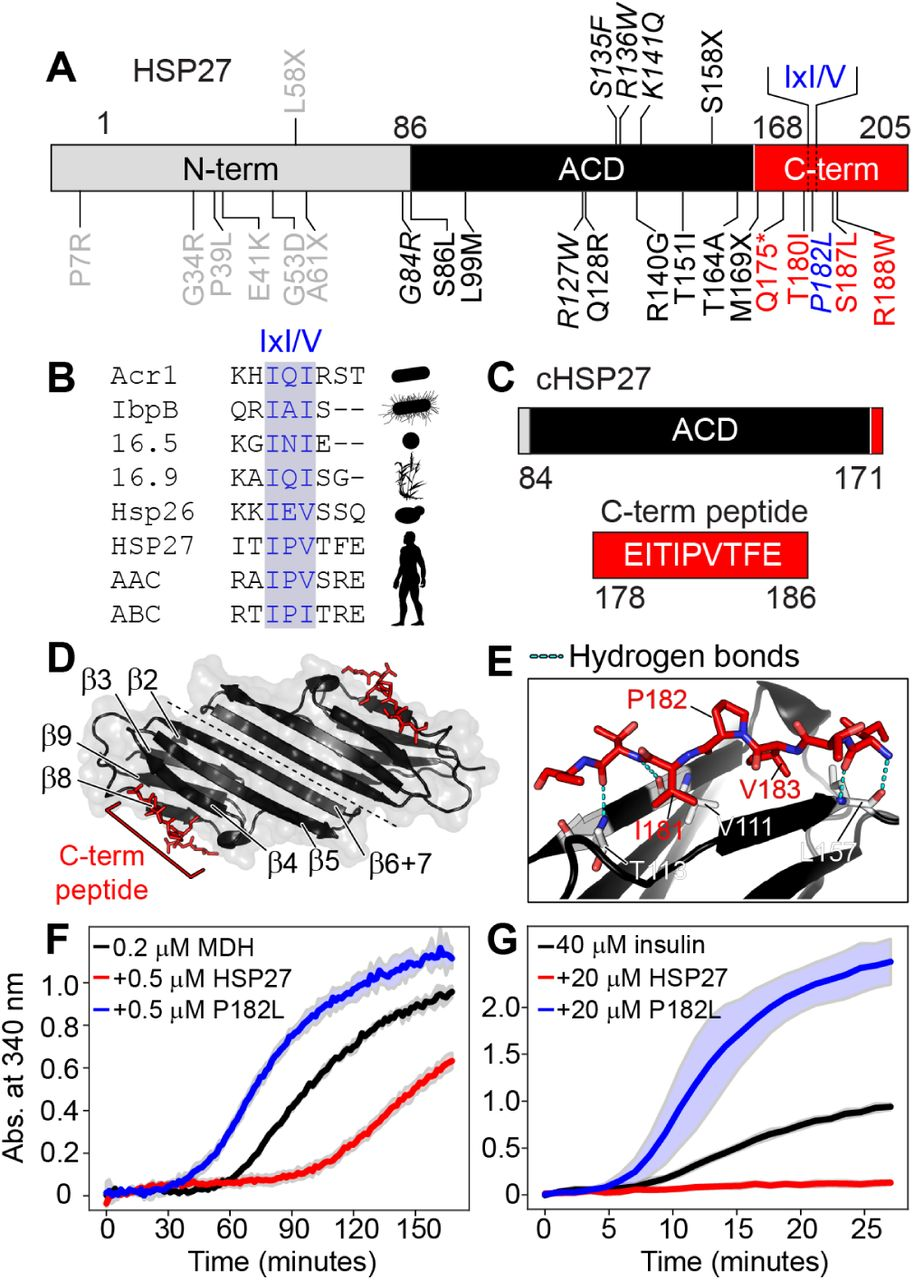 Dysregulated interactions triggered by a neuropathy-causing