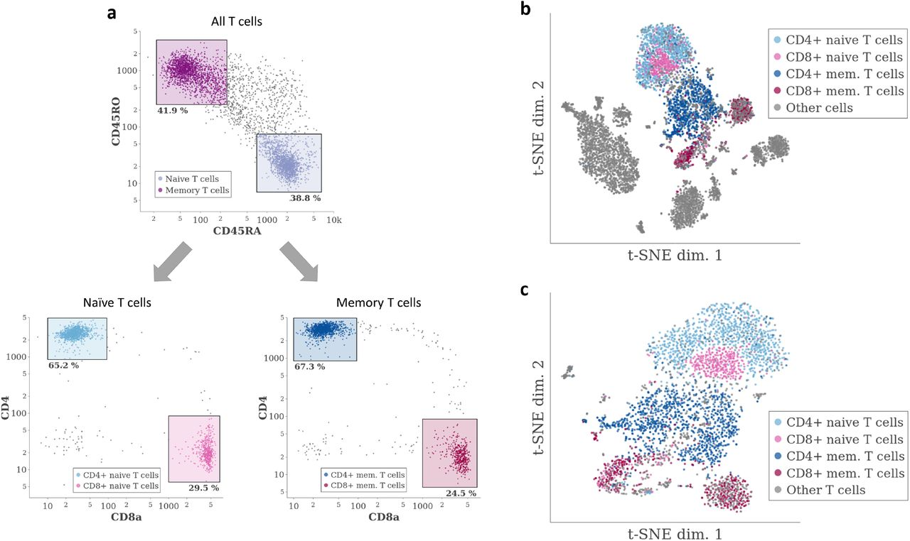 Galapagos' resolution is limited by t-SNE's ability to separate cells belonging to related cell types. a Identification of T cell subtype identities using protein expression measurements from the PBMC CITE-Seq dataset. b Original t-SNE result from Figure 1b , overlaid with the T cell subtype identities established in ( a ). c t-SNE result obtained after selecting only the cells identified as T cells in Figure 1c , overlaid with the same cell type identities as in ( b ).
